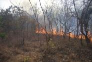 Пожар в редколесье. Еле убежали.