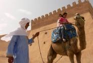 Это верблюд. Кто не знает.