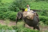 Сфотографировано из поезда по пути из Дели в Калку