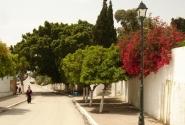 майский Тунис