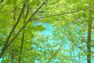 нежные краски природы