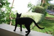 Кошки в Ег.такие...А из нашего окна -кошка черная видна!