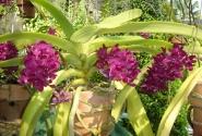 снова орхидеи...