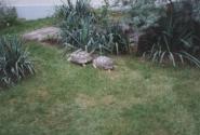 знойный Черепах с Черепашицей