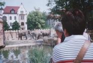 слоновья свадьба