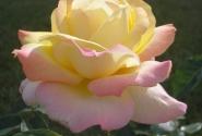 с этих цветиов началось наше крещенское субботнее утро