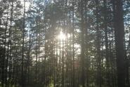 Сонце и лес острова