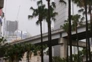 Palm Grouve