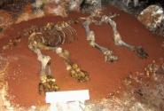 Пещеры Чатырдага. Провалившийся в пещеру мамонт.