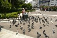 Покормите голубей!
