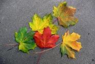 Так приходит осень...Сентябрь 2008