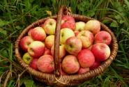 Представьте, какой от этих яблок аромат!!!
