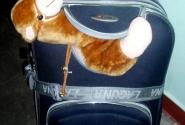 Верблюд для компании Вовчику в чемодан уже не влезал... доехал мордочкой наружу :))