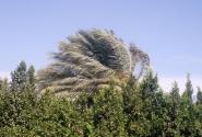 Почему ветер дует? Потому что деревья качаются!