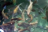 В десяти метрах от берега: рыбы, рыбы