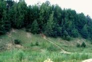Берега зеленые