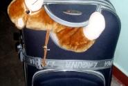 Ах, да, тот самый тяжеленный чемодан и верблюд!