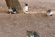 Кошки разные, кошки в яблочках...