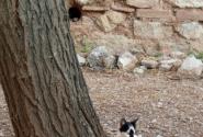 кошки в крапинку и в полосочку.