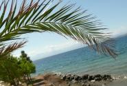 Растительность чудесная - от сосен до пальм.