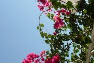 Здесь цветут яркие цветы.