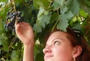 Из такого винограда делают красное вино.
