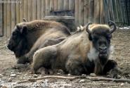 Прага- зоо