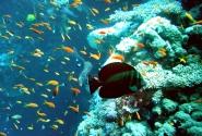 А это под водой 2