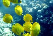 А это под водой 3