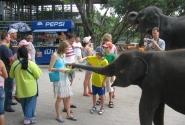Кормление слоника приятное занятие