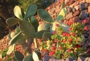 Растительносить