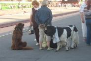Собачки тоже хотят в северную столицу)