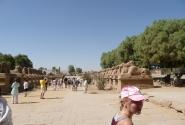 Бараны раньше соединяли Луксорский и Карнакский храмы