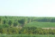 Крестьянски поля