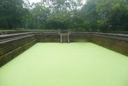 Второй бассейн совсем заросший