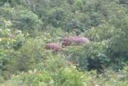 едем в полоннаруву, по дороге встречаем семейство диких слонов. Приближение 1 к 10