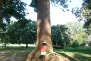 Таких деревьев всё меньше и меньше. С прямым стволом. Дерево необъятное!