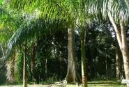 Пальмы как будто не растут, а декоративно украшают!