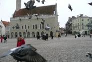 На Ратушной площади. Нападают птицы!!!
