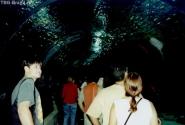 Знаменитый аквариум Барселоны. Мы идем, а над нами толщина воды в несколько метров ))