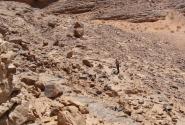 Сначала взбираться в гору было несложно - много камней, но склон пологий