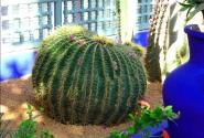 Сады Мажореля
