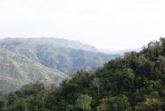 Пальмовые джунгли