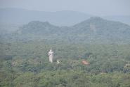 Будда посреди леса