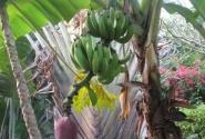Крокодилы, пальмы, баобабы...