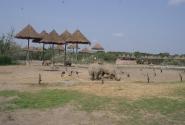 Носороги