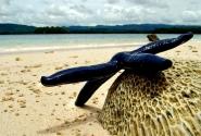 """""""Мечтая о крае вселенной"""". За этой морской звездой, гладкой и прохладной на ощупь, я ныряла сама, чтобы ее сфотографировать. Она побывала в роли модели, а потом вернулась в море:)"""