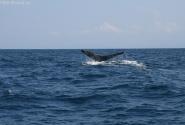 Мама кит махнула хвостиком