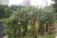 парк KLCC