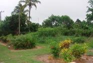 Кубинский огород